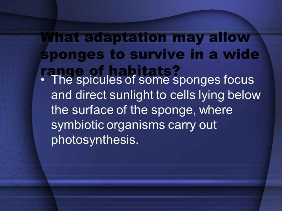 What adaptation may allow sponges to survive in a wide range of habitats