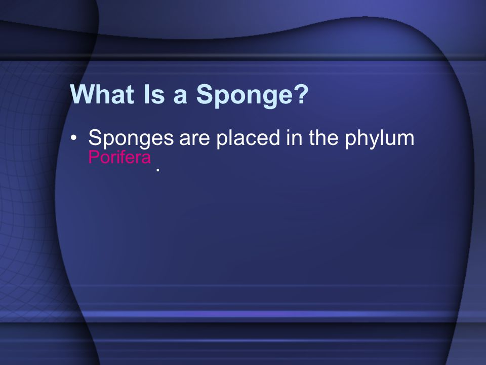What Is a Sponge Sponges are placed in the phylum Porifera .