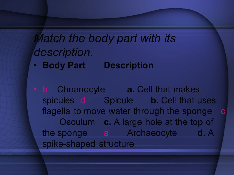 Match the body part with its description.