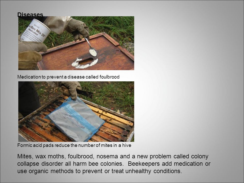Diseases Medication to prevent a disease called foulbrood. Formic acid pads reduce the number of mites in a hive.