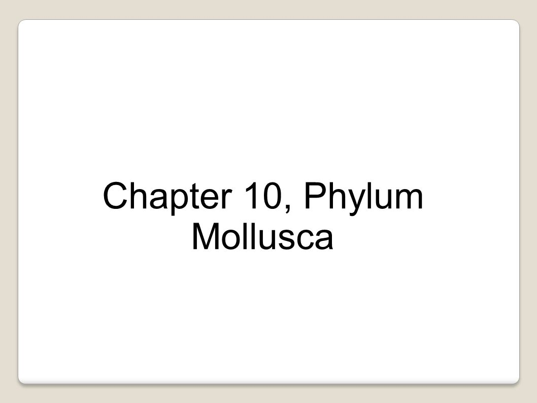 Chapter 10, Phylum Mollusca