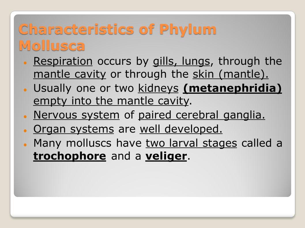 Characteristics of Phylum Mollusca