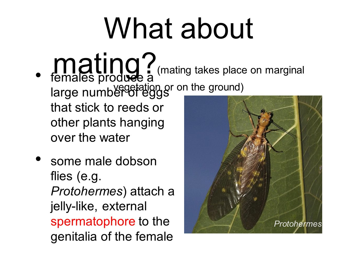 What about mating (mating takes place on marginal vegetation or on the ground)