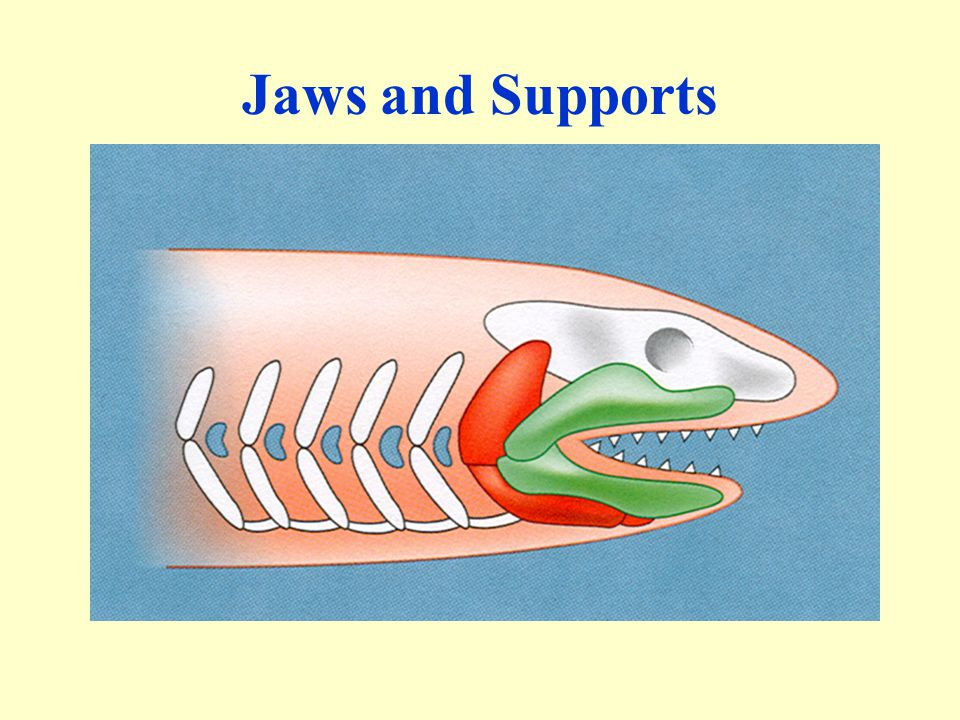 Jaws and Supports