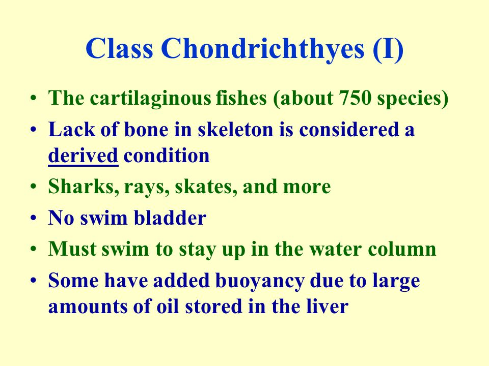 Class Chondrichthyes (I)