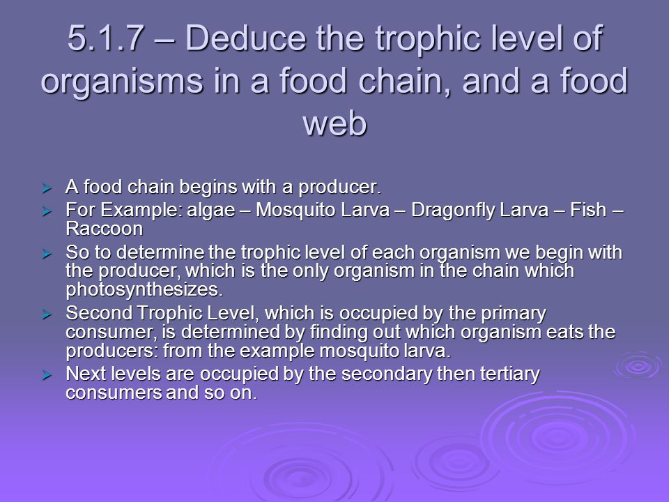 5.1.7 – Deduce the trophic level of organisms in a food chain, and a food web