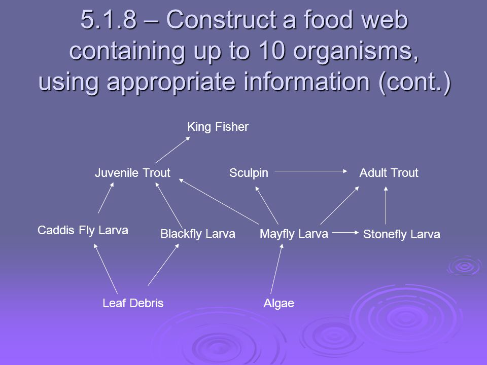 5.1.8 – Construct a food web containing up to 10 organisms, using appropriate information (cont.)