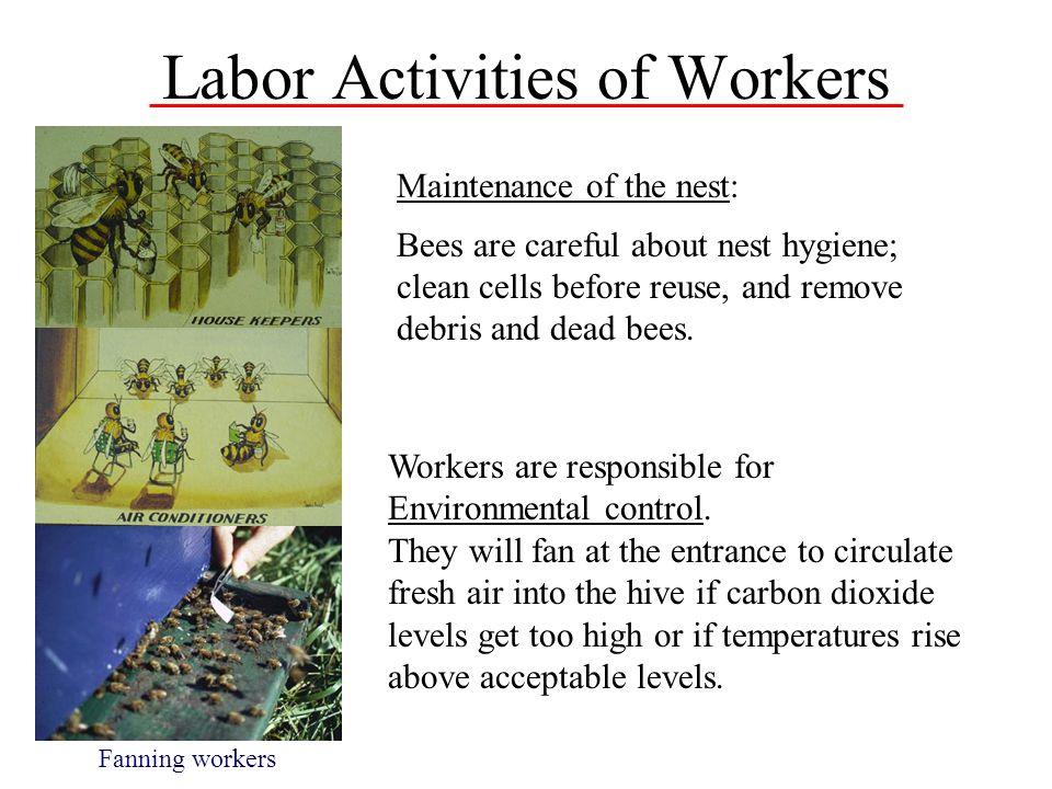 Labor Activities of Workers