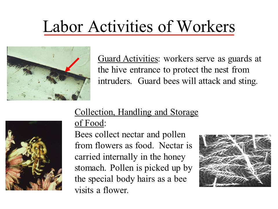 Labor Activities of Workers