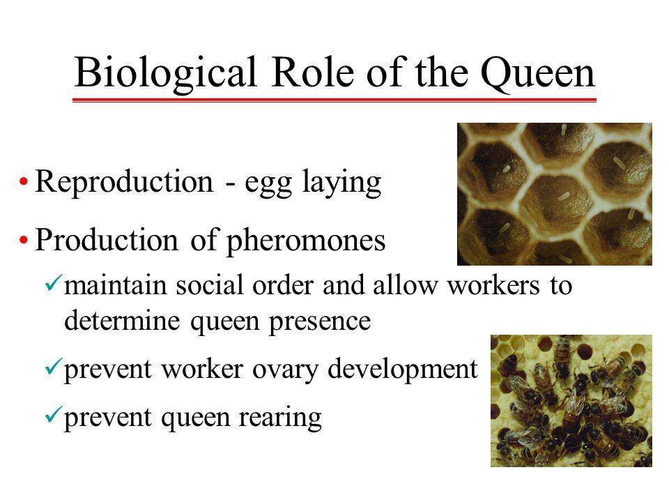 Biological Role of the Queen