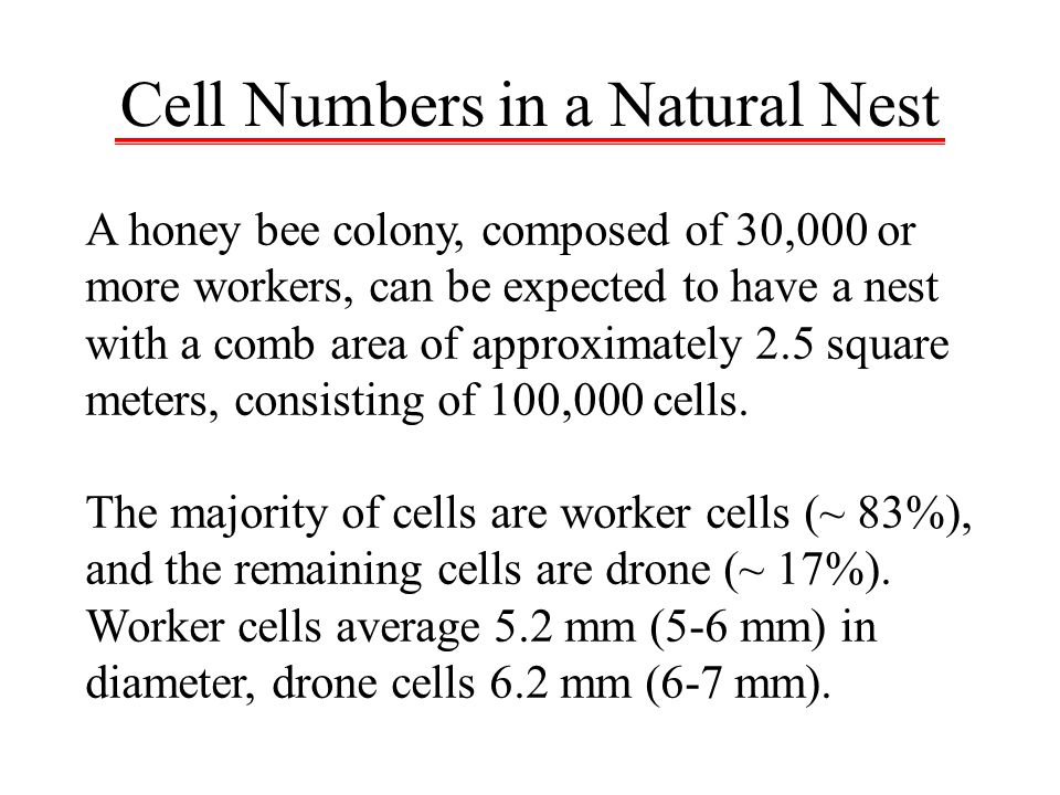 Cell Numbers in a Natural Nest