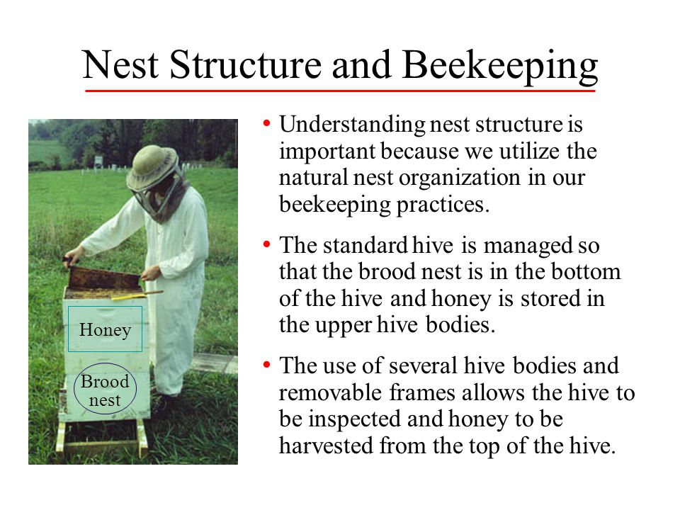 Nest Structure and Beekeeping
