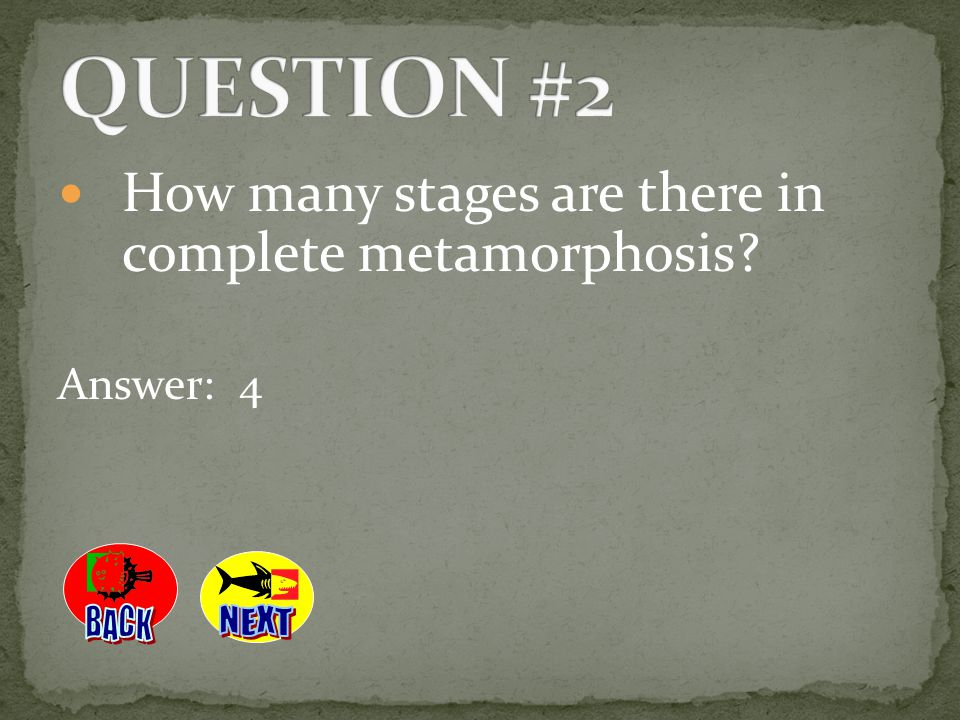 QUESTION #2 How many stages are there in complete metamorphosis BACK