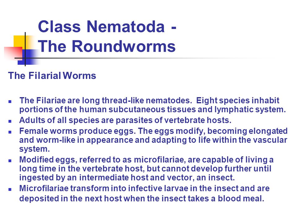 Class Nematoda - The Roundworms