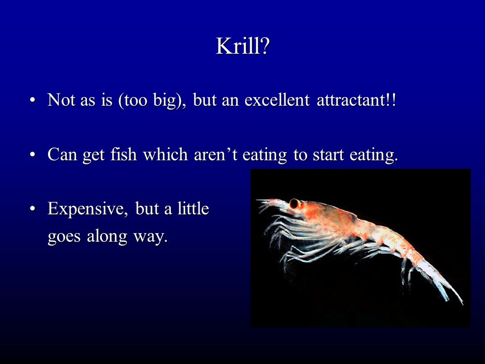Krill Not as is (too big), but an excellent attractant!!