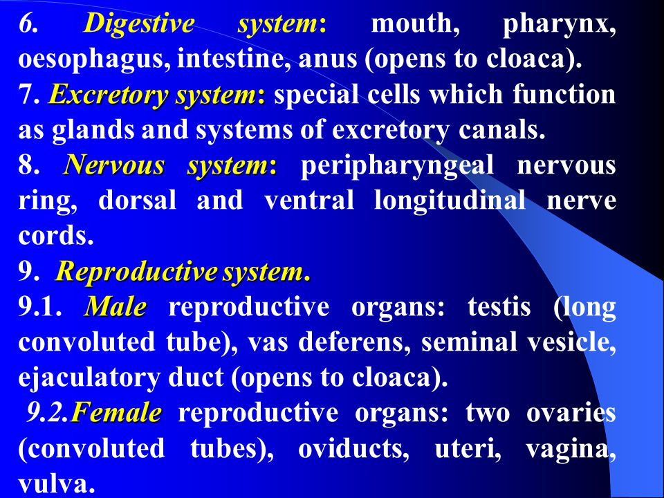6. Digestive system: mouth, pharynx, oesophagus, intestine, anus (opens to cloaca).