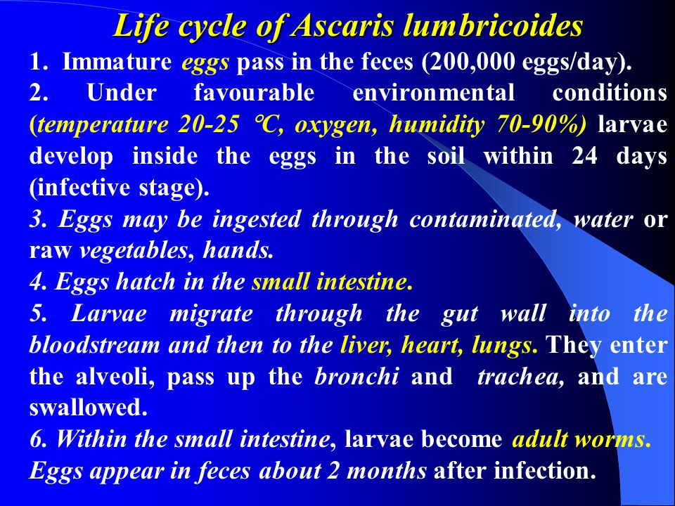 Life cycle of Ascaris lumbricoides