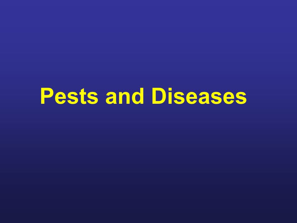 Pests and Diseases For this class we ll discuss some of the pests and diseases that you ll need to become familiar with as a beekeeper.