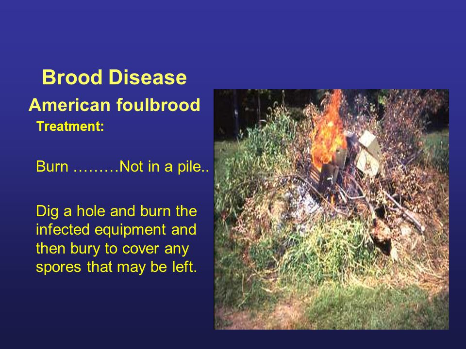 Brood Disease American foulbrood Burn ………Not in a pile..