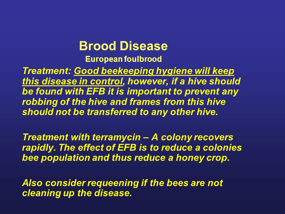 Brood Disease European foulbrood.