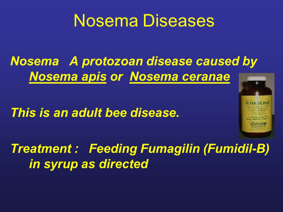 Nosema Diseases Nosema A protozoan disease caused by Nosema apis or Nosema ceranae This is an adult bee disease.