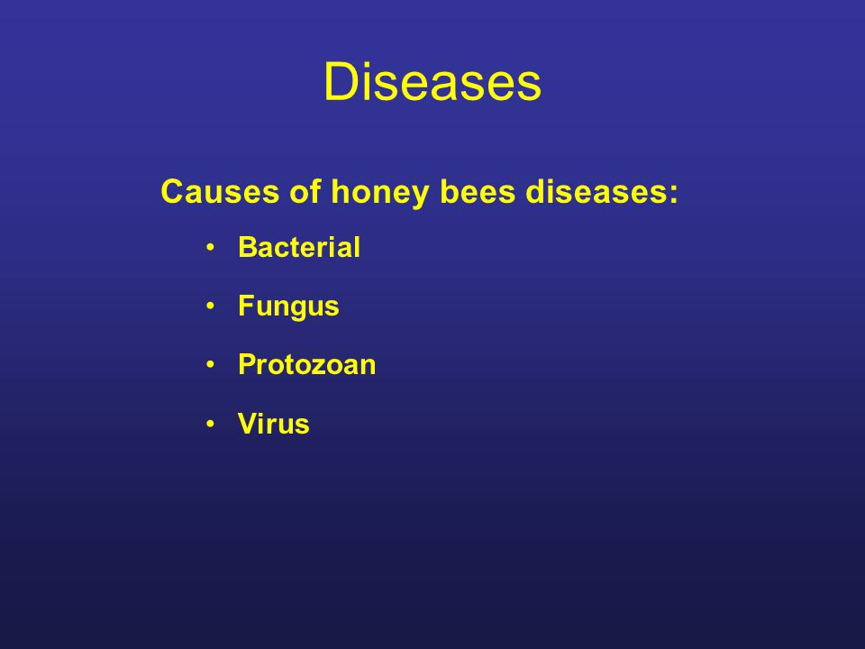 Diseases Causes of honey bees diseases: Bacterial Fungus Protozoan