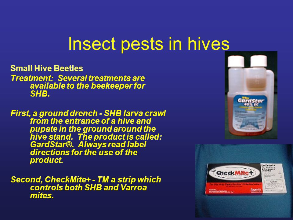 Insect pests in hives Small Hive Beetles