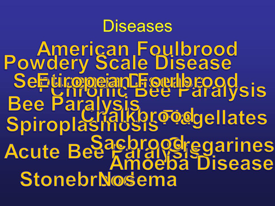 American Foulbrood Powdery Scale Disease Septicemia Disease