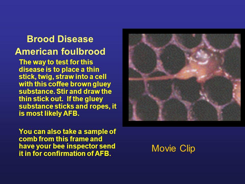 Brood Disease American foulbrood