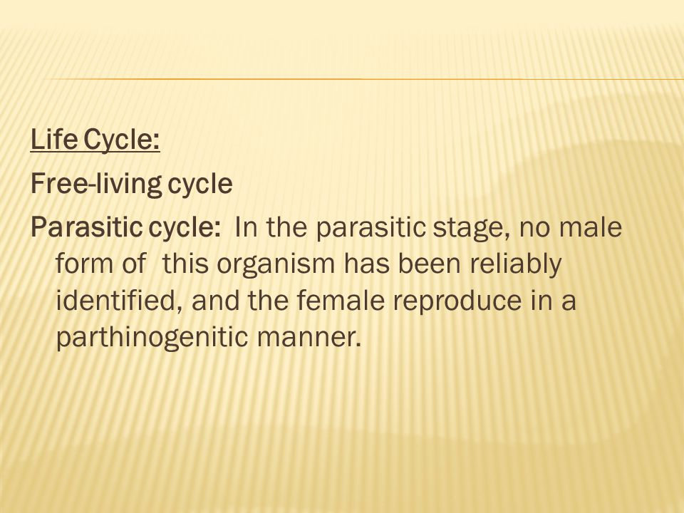 Life Cycle: Free-living cycle Parasitic cycle: In the parasitic stage, no male form of this organism has been reliably identified, and the female reproduce in a parthinogenitic manner.