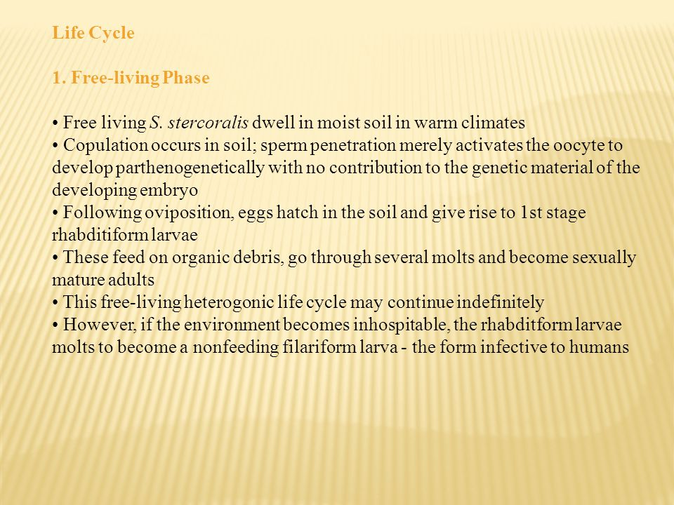 Life Cycle 1. Free-living Phase. Free living S. stercoralis dwell in moist soil in warm climates.