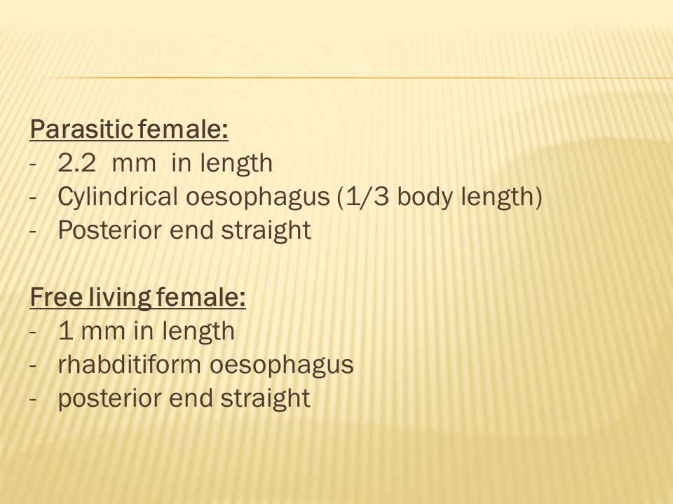 Parasitic female: - 2.2 mm in length - Cylindrical oesophagus (1/3 body length) - Posterior end straight Free living female: - 1 mm in length - rhabditiform oesophagus - posterior end straight