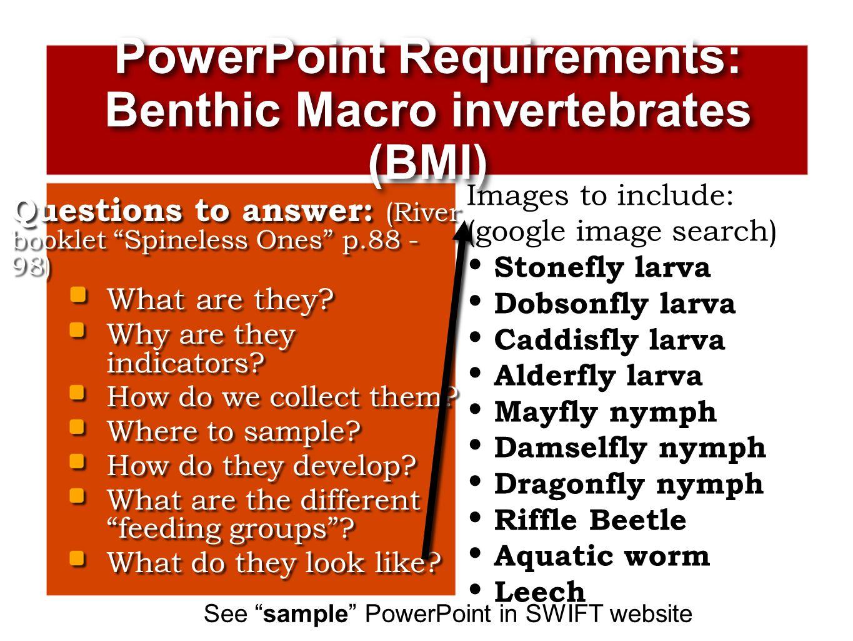 PowerPoint Requirements: Benthic Macro invertebrates (BMI)