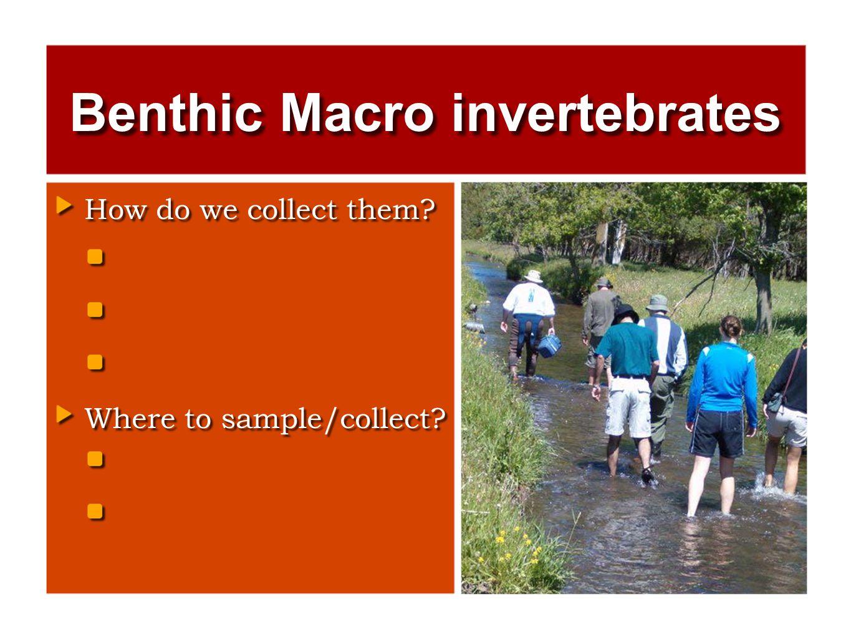 Benthic Macro invertebrates