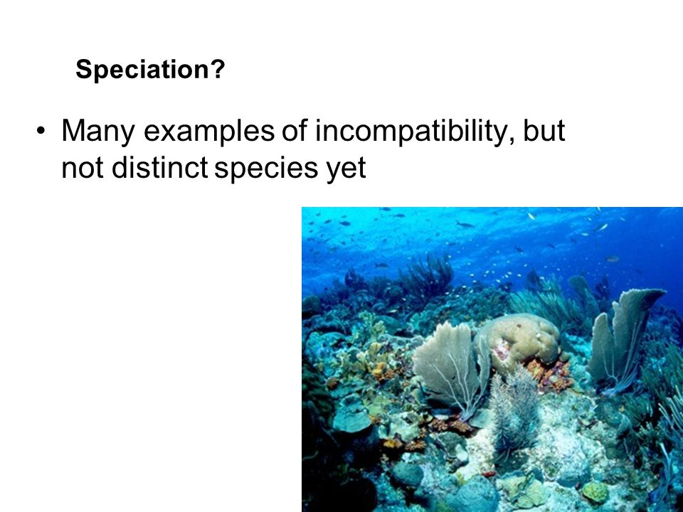 Many examples of incompatibility, but not distinct species yet