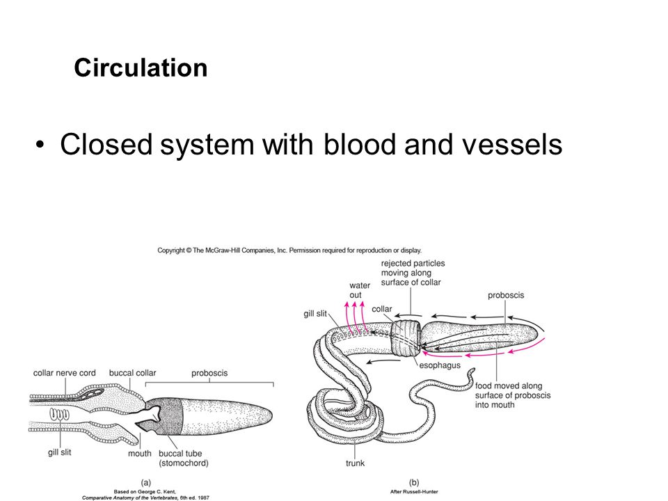 Closed system with blood and vessels