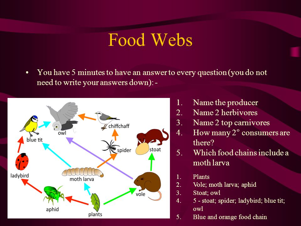 Food Webs You have 5 minutes to have an answer to every question (you do not need to write your answers down): -