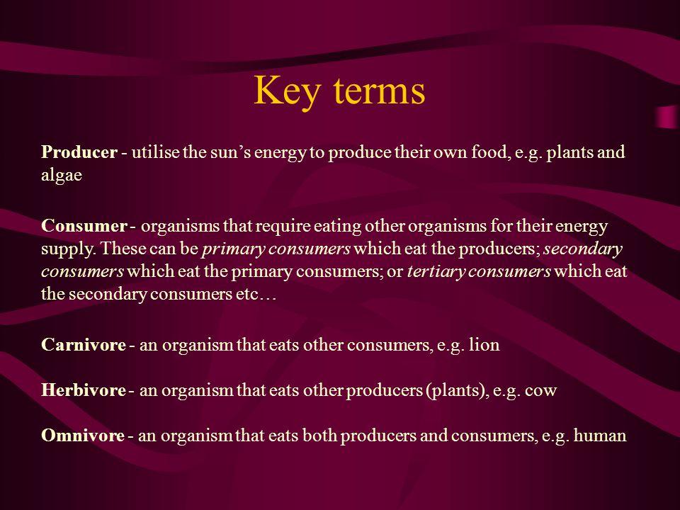 Key terms Producer - utilise the sun's energy to produce their own food, e.g. plants and algae.