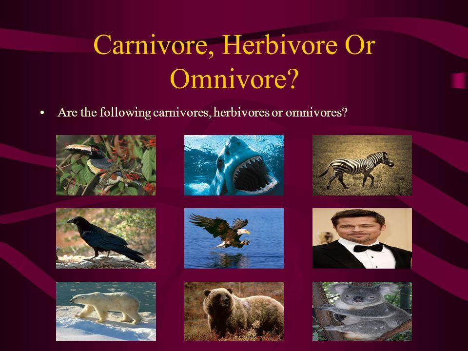 Carnivore, Herbivore Or Omnivore
