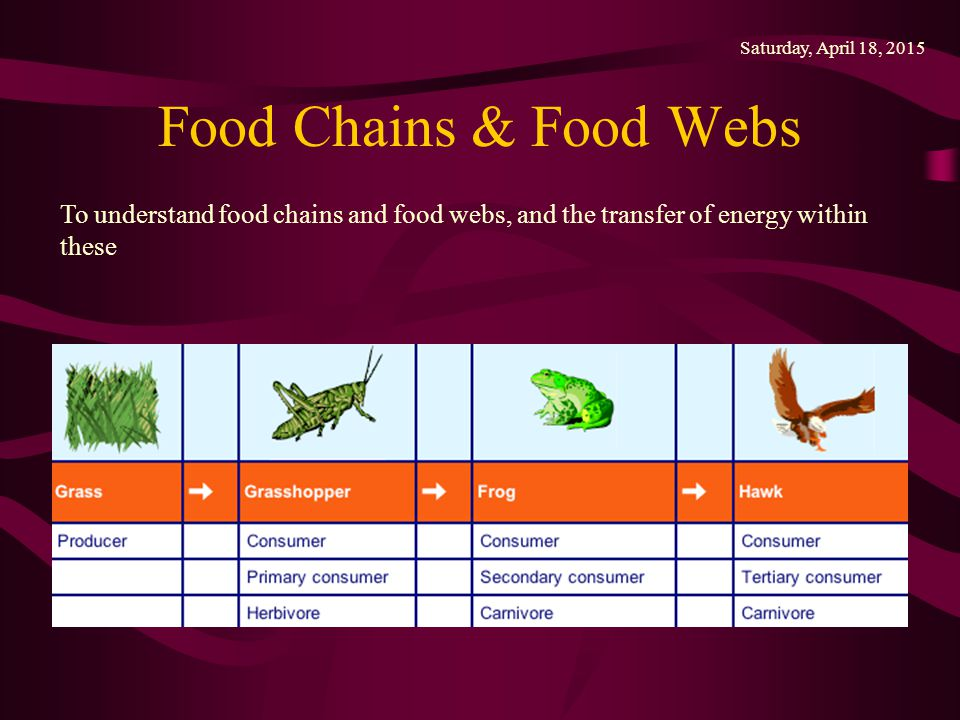 Wednesday, April 12, 2017 Food Chains & Food Webs.