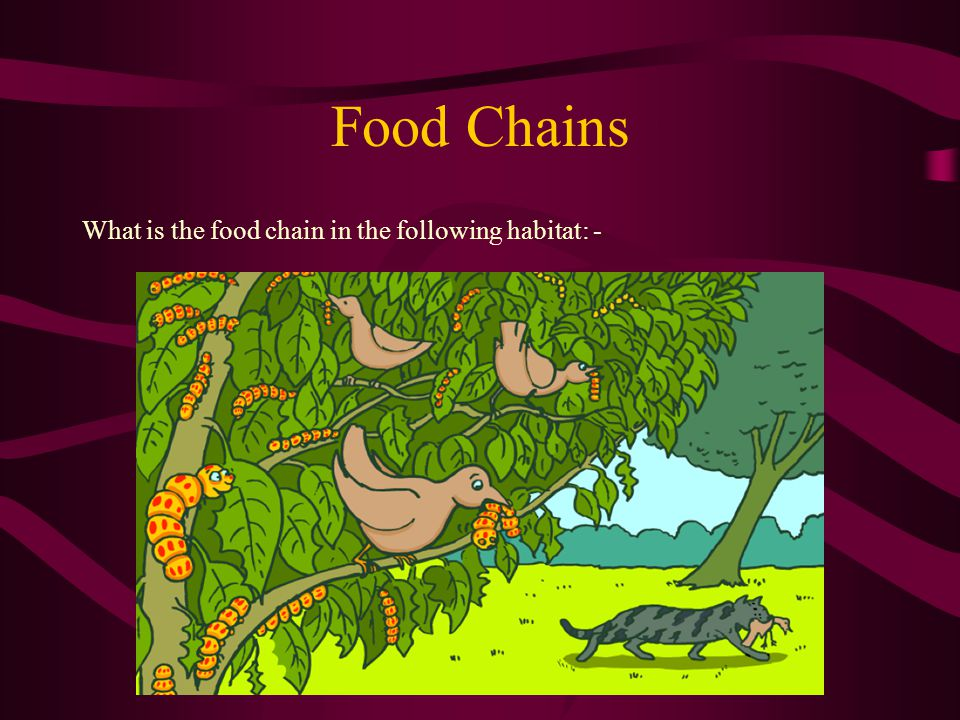 Food Chains What is the food chain in the following habitat: -