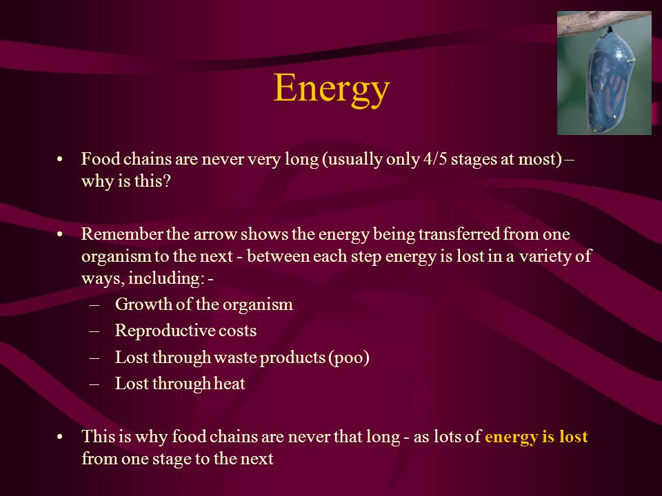 Energy Food chains are never very long (usually only 4/5 stages at most) – why is this