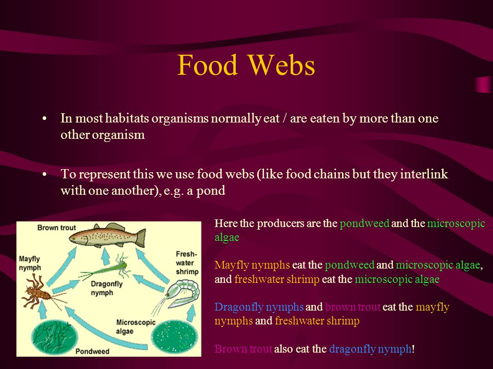 Food Webs In most habitats organisms normally eat / are eaten by more than one other organism.