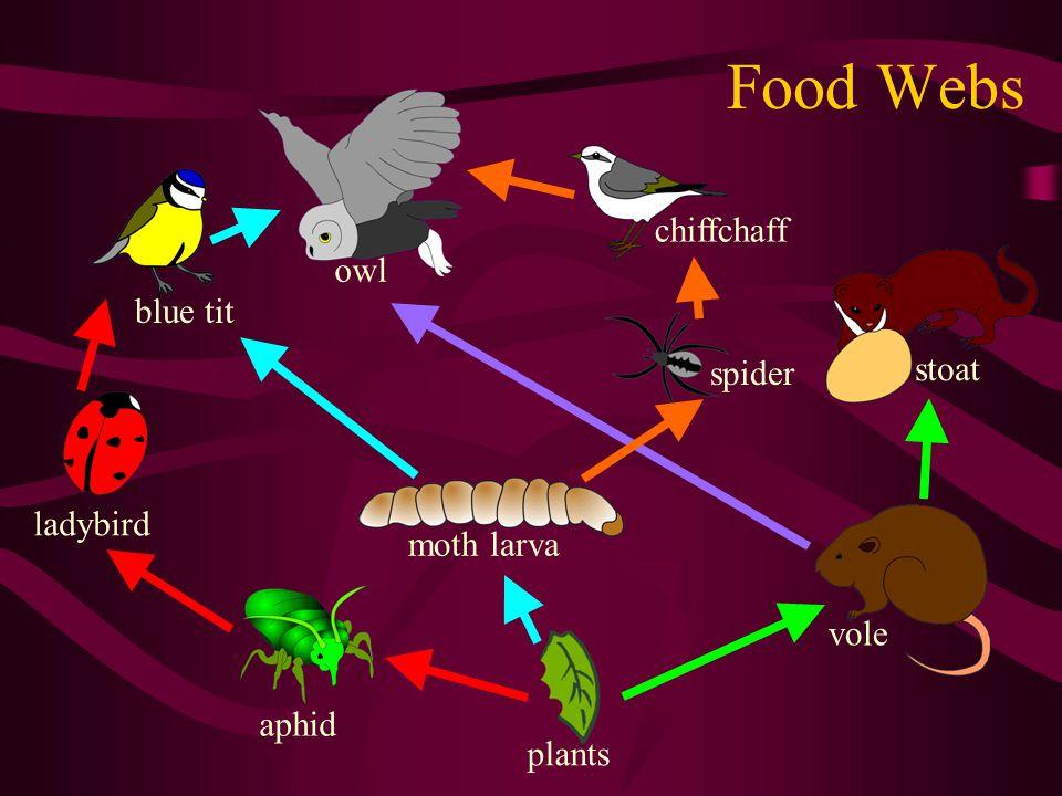 Food Webs chiffchaff owl blue tit stoat spider ladybird moth larva