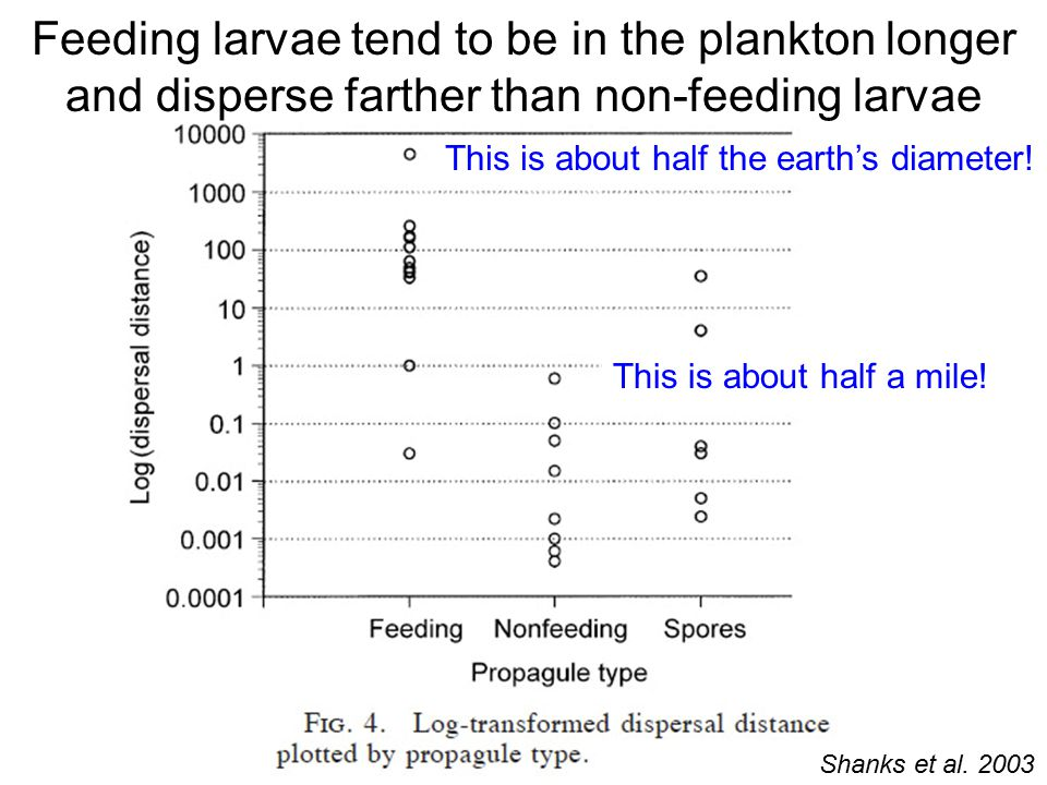 Feeding larvae tend to be in the plankton longer and disperse farther than non-feeding larvae