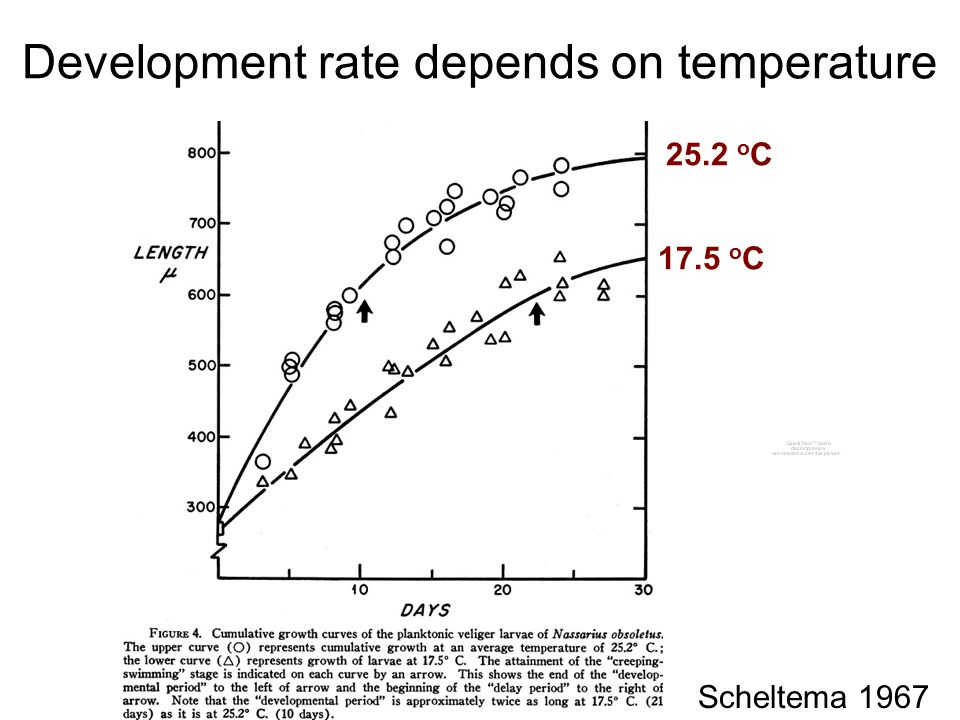 Development rate depends on temperature