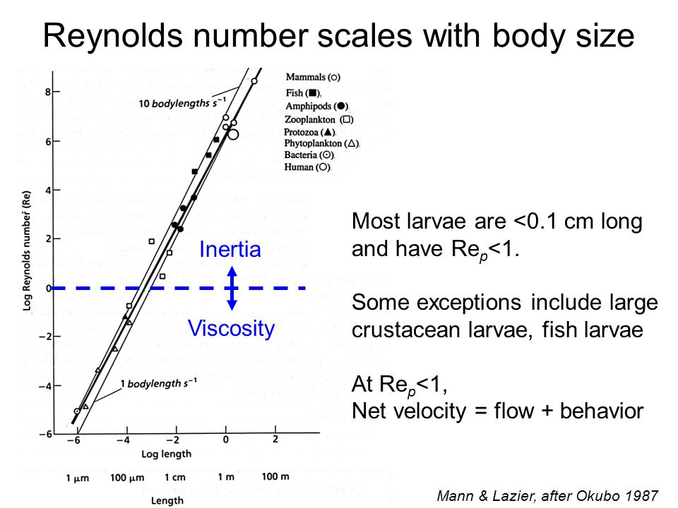 Reynolds number scales with body size