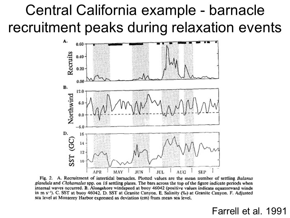 Central California example - barnacle recruitment peaks during relaxation events