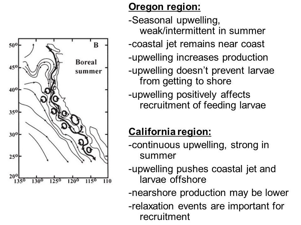 Oregon region: -Seasonal upwelling, weak/intermittent in summer. -coastal jet remains near coast. -upwelling increases production.