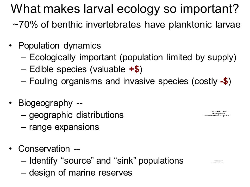 What makes larval ecology so important